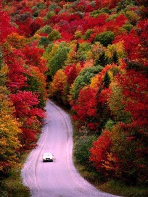 nature, autumn, vegetation, leaf, flora,