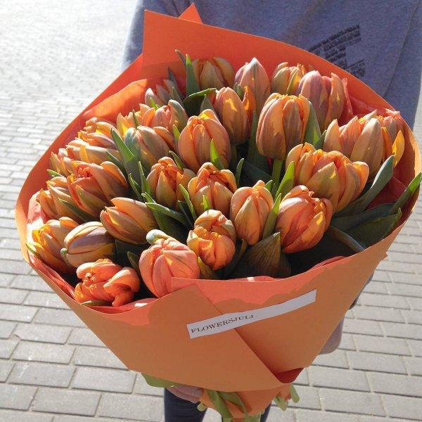 flower, plant, tulip, land plant, flowering plant,
