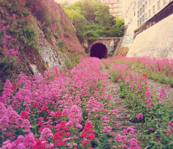 flower, flora, plant, botany, land plant,