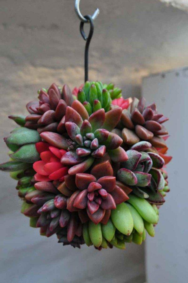 flower,flower arranging,plant,flora,pink,
