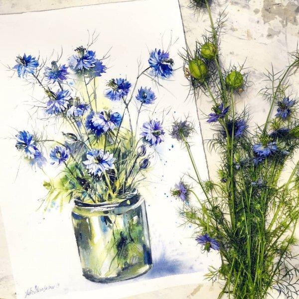Flower, Plant, Flowering plant, Lavender, love in the mist,
