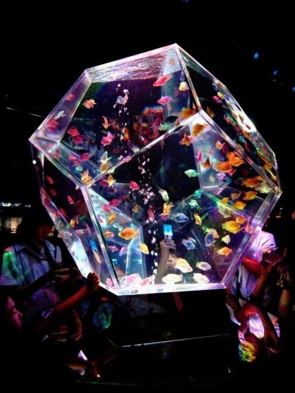 stage,disco,nightclub,games,rave,