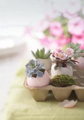 pink,flower arranging,flower,floristry,plant,