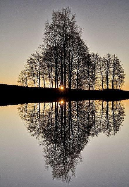 reflection,nature,tree,atmospheric phenomenon,water,