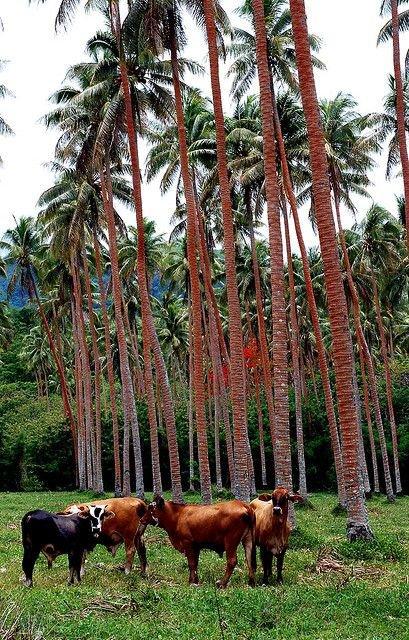 Efate, Vanuatu