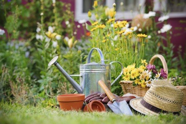 flower,lawn,backyard,garden,flower arranging,
