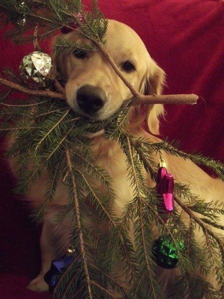 River's Christmas Tree