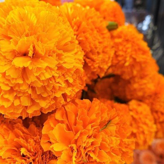orange, yellow, flower, calendula, petal,