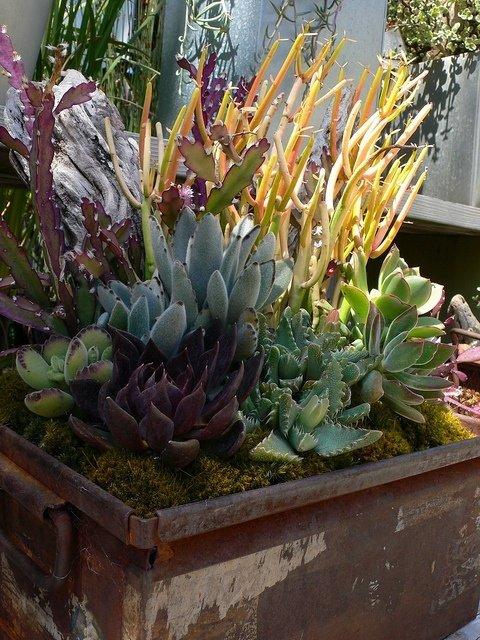 plant,flower,flora,botany,land plant,