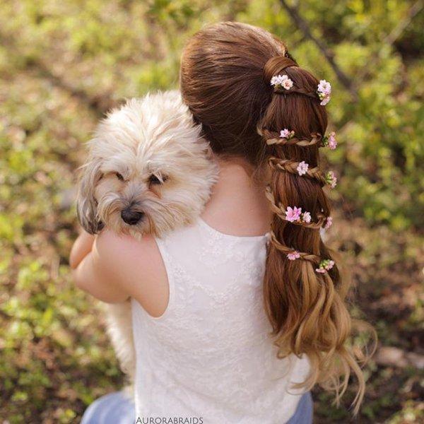 pet, hairstyle, dog, dog breed, toy dog,