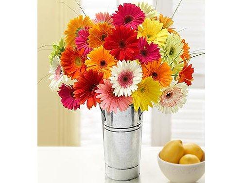 flower,gerbera,plant,cut flowers,flower bouquet,