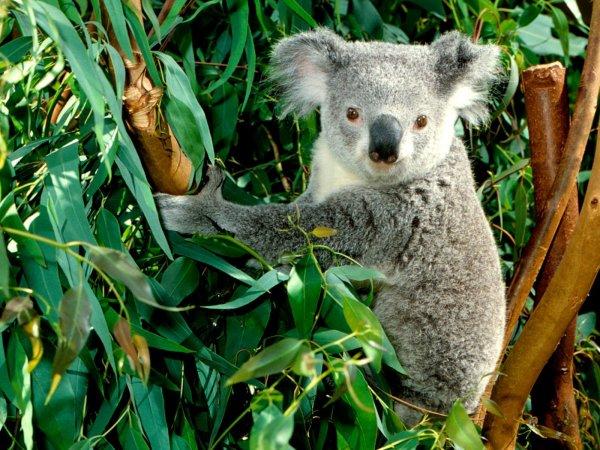 See Unique Animals in Australia