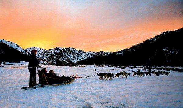 Dog Sledding at the Arctic Circle