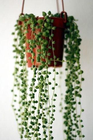 green,flower arranging,plant,floristry,christmas decoration,
