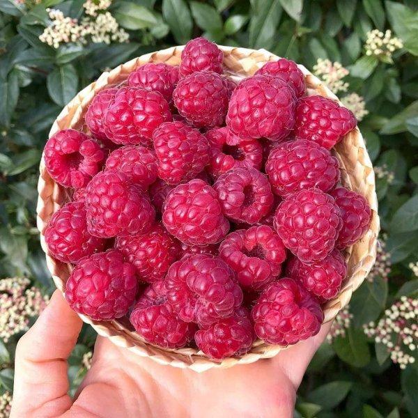 Berry, Food, Fruit, Raspberry, Plant,