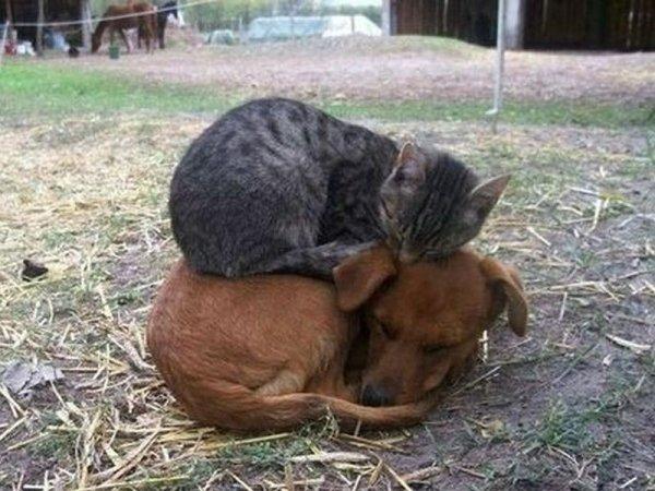 I Love My Slave!