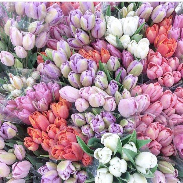 flower, flowering plant, plant, tulip, floristry,