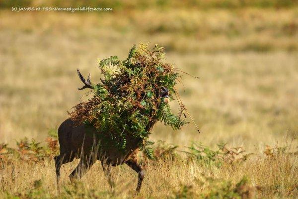 savanna, wildlife, grassland, fauna, ecosystem,