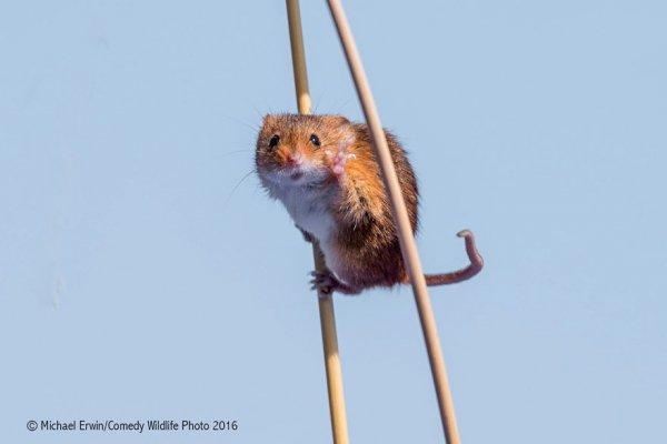 mammal, vertebrate, fauna, squirrel, rodent,