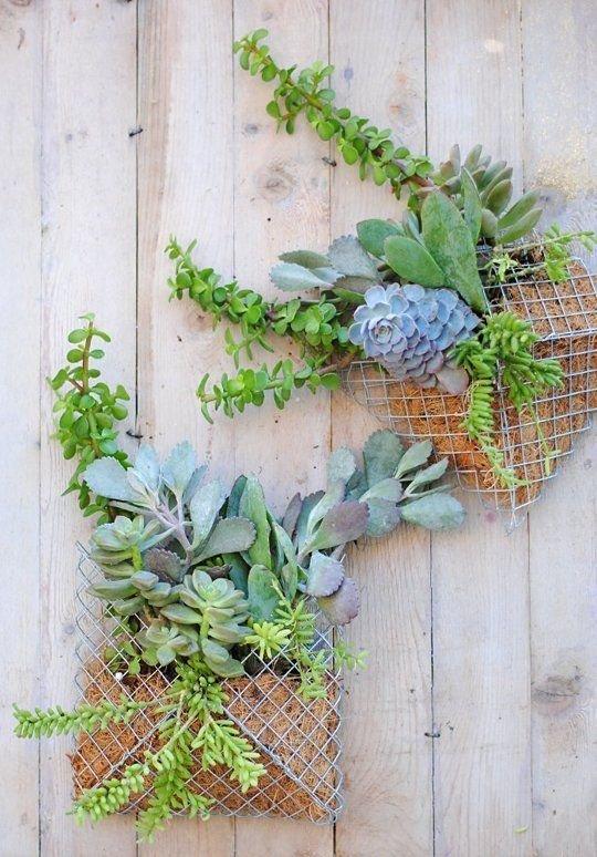 green,plant,botany,wall,flower arranging,