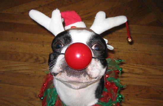 reindeer, christmas, snout, christmas ornament, holiday,