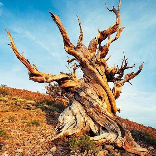 nature, tree, wilderness, plant, flora,