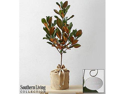 plant, flowerpot, tree, branch, vase,