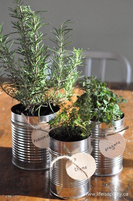 plant,tree,flower arranging,rosemary,herb,