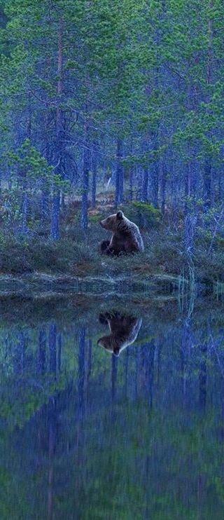 wilderness,wetland,tree,ecosystem,swamp,