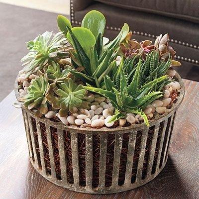 plant,land plant,flower,flower arranging,flowering plant,