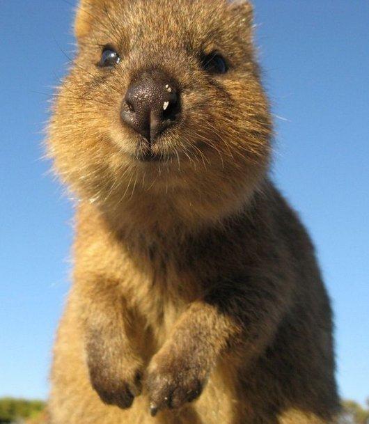 mammal,vertebrate,fauna,squirrel,prairie dog,