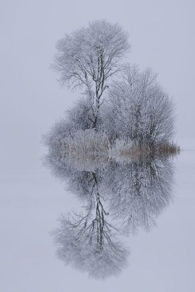 winter,snow,tree,branch,frost,