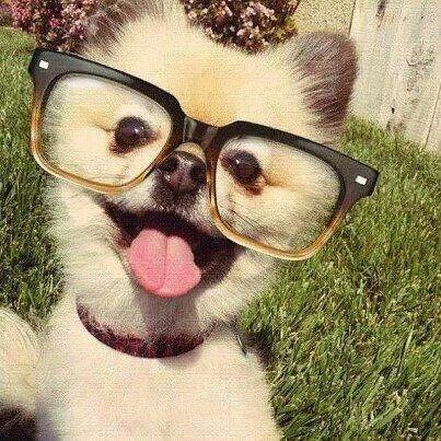 dog,mammal,glasses,vertebrate,nose,