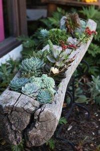flower arranging,plant,floristry,flower,leaf,
