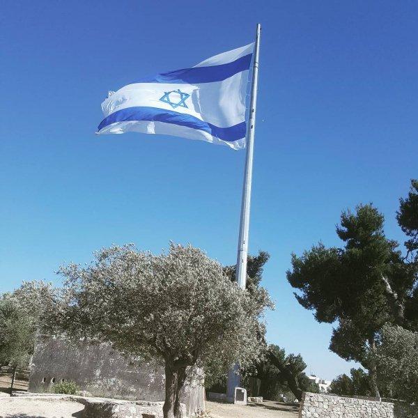 sky, flag, tree, wind,
