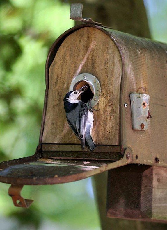 Remade Mailbox Bird House