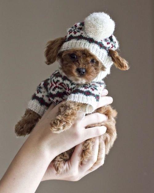 Winter Puppy