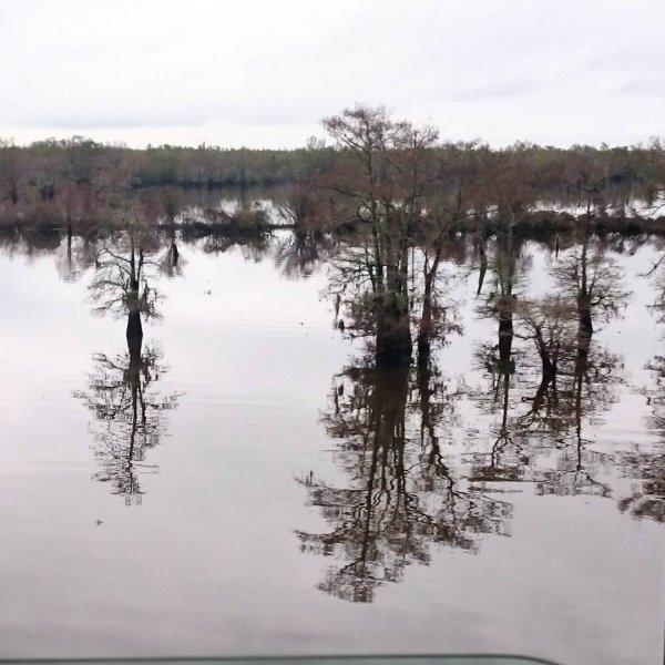 habitat, bayou, wetland, natural environment, pond,