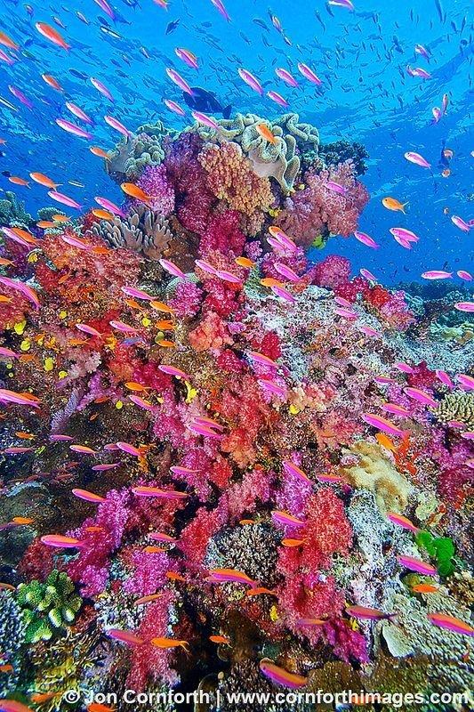 Namena Marine Reserve, Fiji
