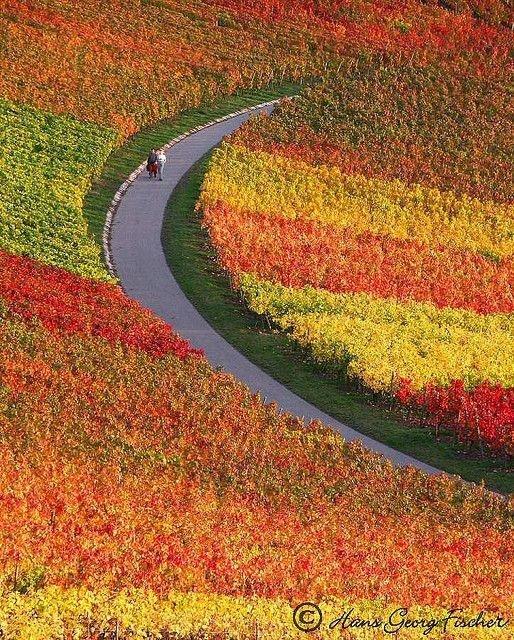 Vineyards near Heilbronn, Germany