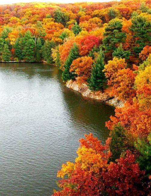 nature, autumn, vegetation, leaf, reflection,