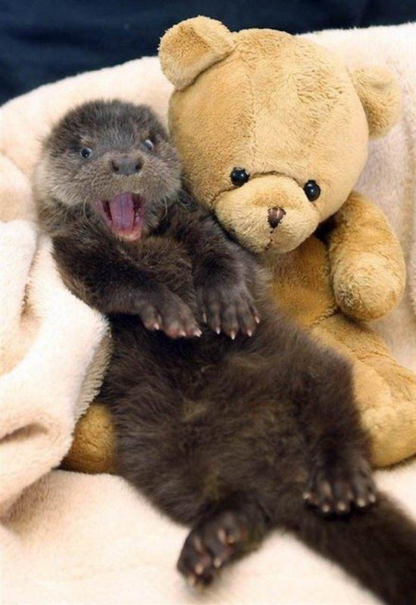 mammal,vertebrate,stuffed toy,toy,bear,