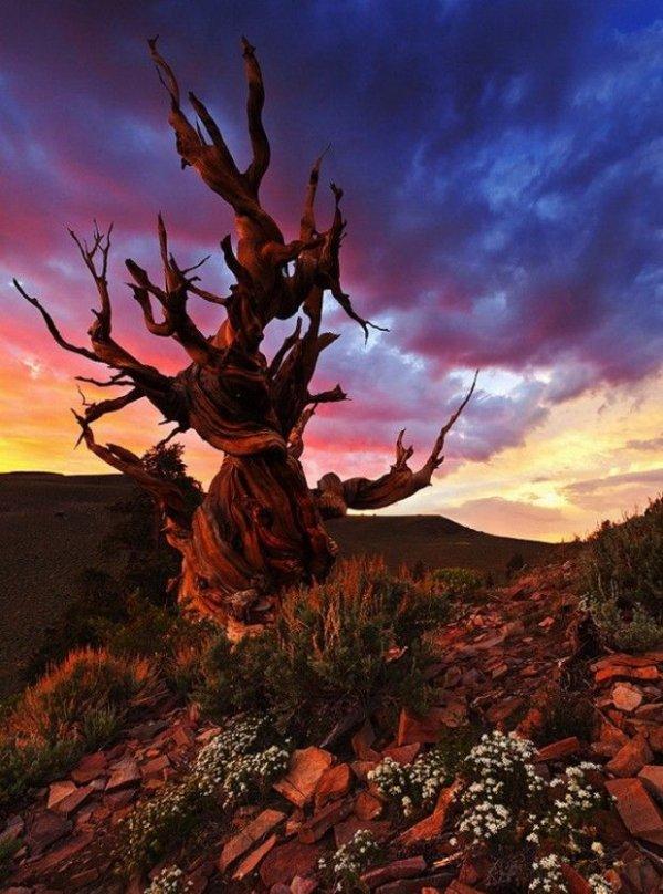 Nevada - Great Basin National Park