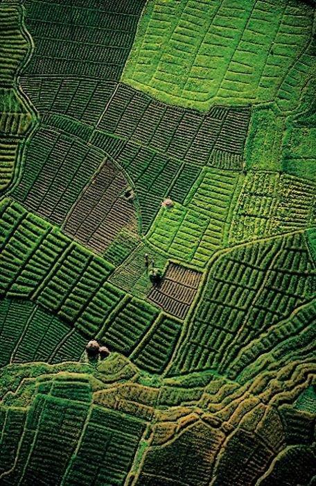 The 40 Shades of Green, Ireland