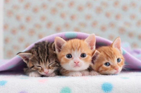 cat, small to medium sized cats, mammal, cat like mammal, vertebrate,