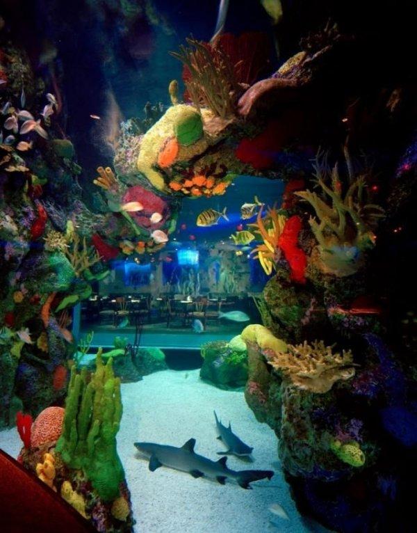 The Aquarium Restaurant, Kemah