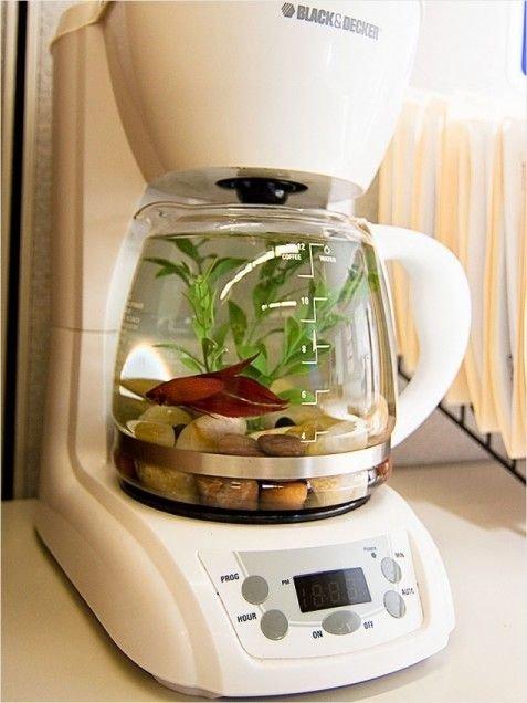 Coffee Maker Fish Tank