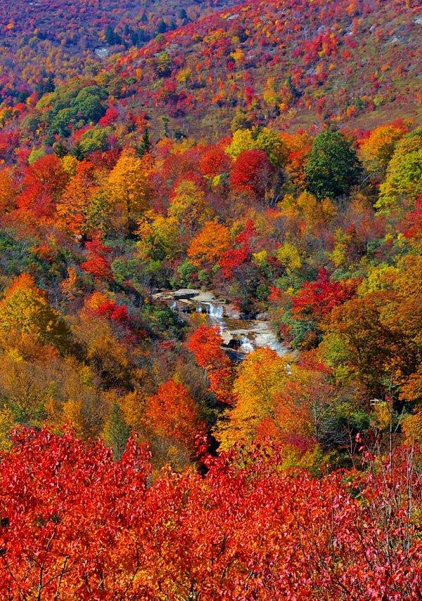 nature, autumn, vegetation, leaf, ecosystem,