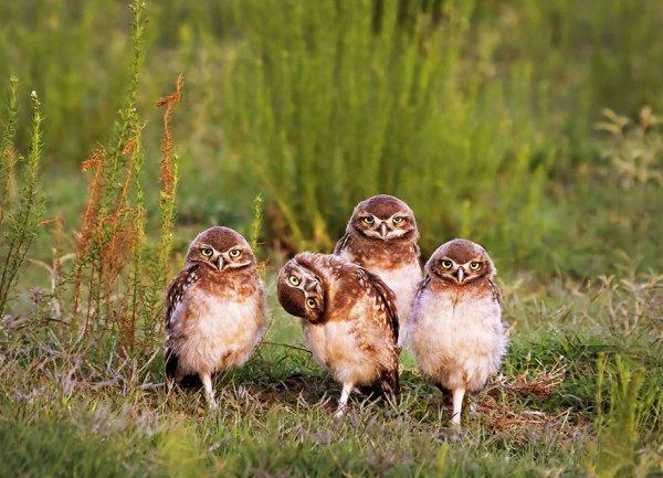 bird, vertebrate, fauna, wildlife, prairie,