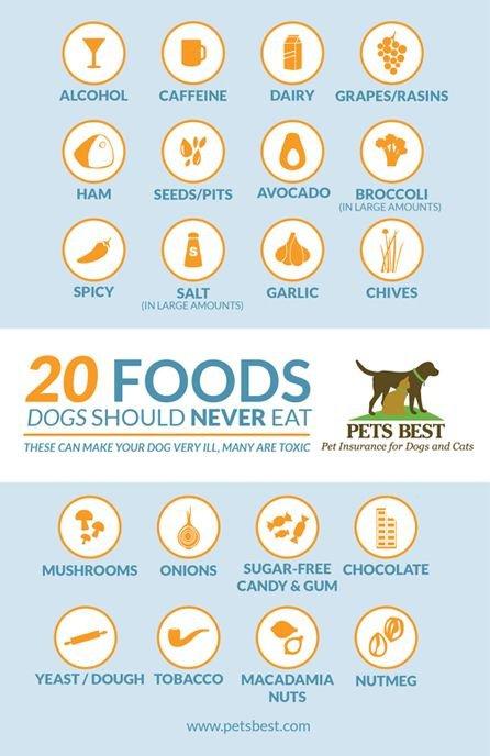 Pets Best,icon,font,brand,illustration,